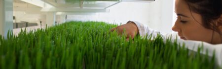 What's new in the world of Wheatgrass